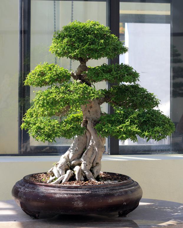 bonsai growth criticism